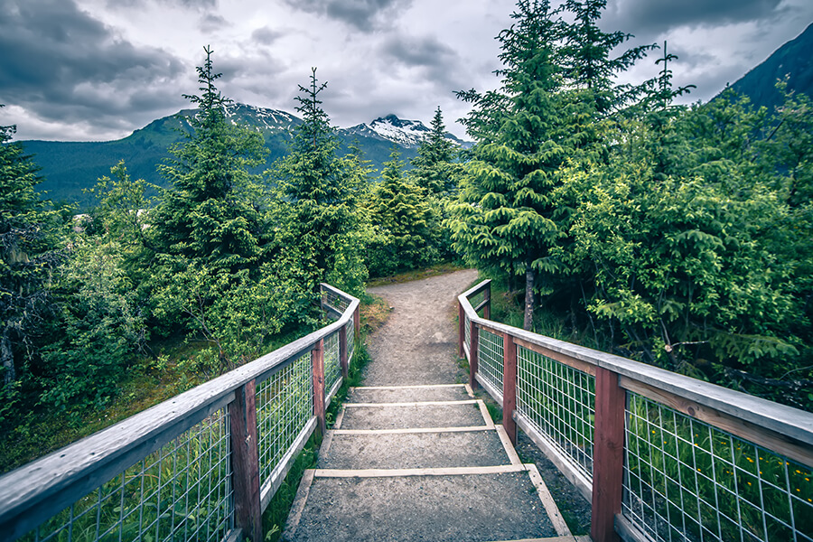 About Us - Mountain Path with Green Evergreen Trees and Mountains in Background